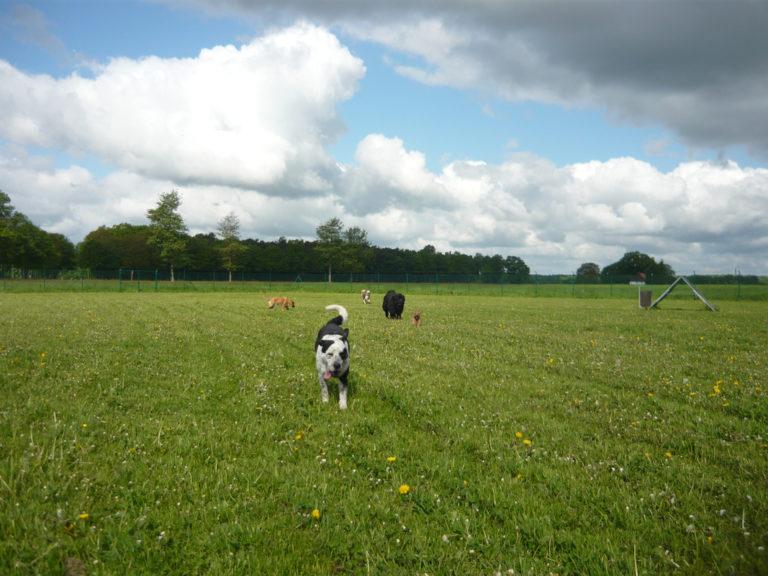 Tierpension Fifficats - Hunde auf der Wiese