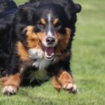 Fifficats Hundepension & Hundeschule