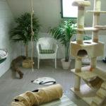 Katzenpension Fifficats Spielwiese 2