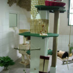 Katzenpension Fifficats Spielwiese 3